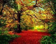 Краса вересня - частина 4 Природа, Осінь, Дерева, Листя, Сонце, Гори, Позитив, Небо, Ліс, Царство Природи id244258119