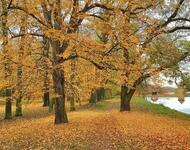 Краса вересня - частина 4 Природа, Осінь, Дерева, Листя, Сонце, Гори, Позитив, Небо, Ліс, Царство Природи id1757110410