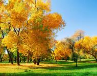 Краса жовтня - частина 1 Природа, Листя, Осінь, Жовтень, Дерева, Парк, Схід, Сонце, Вода, Небо id2127144701