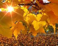 Краса жовтня - частина 2 Природа, Осінь, Жовтень, Дерева, Парк, Схід, Сонце, Вода, Листя, Небо id431592328