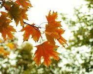 Краса жовтня - частина 2 Природа, Осінь, Жовтень, Дерева, Парк, Схід, Сонце, Вода, Листя, Небо id2040860793