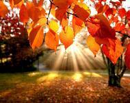 Краса жовтня - частина 3 Природа, Осінь, Жовтень, Дерева, Парк, Схід, Сонце, Вода, Листя, Небо id327681651