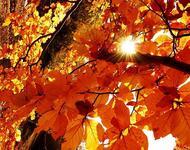 Краса жовтня - частина 3 Природа, Осінь, Жовтень, Дерева, Парк, Схід, Сонце, Вода, Листя, Небо id2086174174