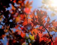 Краса жовтня - частина 3 Природа, Осінь, Жовтень, Дерева, Парк, Схід, Сонце, Вода, Листя, Небо id1920124604