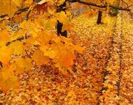 Краса жовтня - частина 4 Природа, Осінь, Жовтень, Дерева, Парк, Схід, Сонце, Вода, Листя, Небо id1661960676