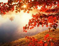 Краса жовтня - частина 5 Природа, Осінь, Жовтень, Дерева, Парк, Схід, Сонце, Вода, Листя, Небо id894099672