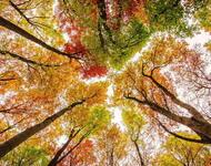 Краса жовтня - частина 6 Природа, Осінь, Жовтень, Дерева, Парк, Схід, Сонце, Вода, Листя, Небо id1137304782