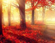 Краса жовтня - частина 7 Природа, Осінь, Жовтень, Дерева, Парк, Схід, Сонце, Вода, Листя, Небо id1610107913