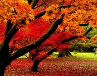 Краса жовтня - частина 7 Природа, Осінь, Жовтень, Дерева, Парк, Схід, Сонце, Вода, Листя, Небо id392038488