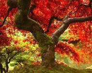 Краса жовтня - частина 8 Природа, Осінь, Жовтень, Дерева, Парк, Схід, Сонце, Вода, Листя, Небо id24230181