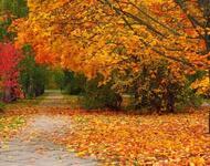 Краса жовтня - частина 9 Природа, Осінь, Жовтень, Дерева, Парк, Схід, Сонце, Вода, Листя, Небо id618224849