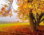 Краса жовтня - частина 9 Природа, Осінь, Жовтень, Дерева, Парк, Схід, Сонце, Вода, Листя, Небо id176939795