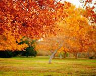 Краса жовтня - частина 10 Природа, Осінь, Жовтень, Дерева, Парк, Схід, Сонце, Вода, Листя, Небо id80305162