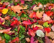 Краса жовтня - частина 12 Природа, Осінь, Жовтень, Дерева, Парк, Схід, Сонце, Вода, Листя, Небо id1194350937