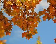 Краса жовтня - частина 14 Природа, Осінь, Жовтень, Дерева, Парк, Схід, Сонце, Вода, Листя, Небо id802980869