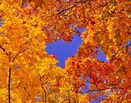 Краса жовтня - частина 16 Природа, Осінь, Жовтень, Дерева, Парк, Схід, Сонце, Вода, Листя, Небо id1641737771
