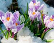 Весна. Березень. Пори року Природа, Проліски, Весна, Березень, Дерева, Прикмети, Сонце, Сніг, Підсніжники, Пори року id1520716078