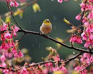 Весна. Травень. Пори року. Прикмети Природа, Квіти, Весна, Травень, Соловей, Прикмети, Сонце, Птахи, Трава, Пори року id341806895