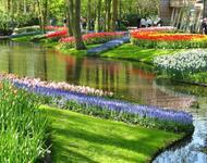 Знайомства Нідерланди. Кекенхоф - КОРОЛІВСЬКИЙ ПАРК КВІТІВ.  Цікаві місця для побачень, Нідерланди, Квіти, Парк, Знайомства, Дві Зірки, 12dz.com id534987376