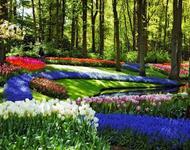 Знайомства Нідерланди. Кекенхоф - КОРОЛІВСЬКИЙ ПАРК КВІТІВ.  Цікаві місця для побачень, Нідерланди, Квіти, Парк, Знайомства, Дві Зірки, 12dz.com id2048818524
