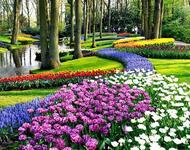 Знайомства Нідерланди. Королівський парк  Цікаві місця для побачень, Нідерланди, Квіти, Парк, Знайомства, Дві Зірки, 12dz.com id1257390748