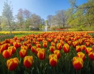 Dating Netherlands. Garden of Europe - Keukenhof Цікаві місця для побачень, Netherlands, Flowers, Park, Dating, Dvi Zirky, 12dz.com id92132327