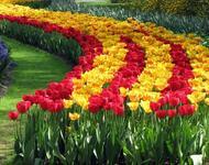 Dating Netherlands. Garden of Europe - Keukenhof Цікаві місця для побачень, Netherlands, Flowers, Park, Dating, Dvi Zirky, 12dz.com id406530699