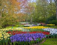Dating Netherlands. Garden of Europe - Keukenhof Цікаві місця для побачень, Netherlands, Flowers, Park, Dating, Dvi Zirky, 12dz.com id632919097