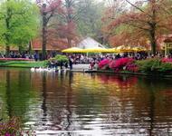 Dating Netherlands. Garden of Europe - Keukenhof Цікаві місця для побачень, Netherlands, Flowers, Park, Dating, Dvi Zirky, 12dz.com id411872717