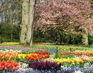 Знайомства Нідерланди. Кекенхоф - садово-паркове мистецтво Цікаві місця для побачень, Нідерланди, Квіти, Парк, Знайомства, Дві Зірки, 12dz.com id1035964988