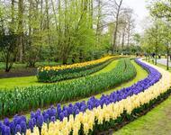 Знайомства Нідерланди. Кекенхоф - садово-паркове мистецтво Цікаві місця для побачень, Нідерланди, Квіти, Парк, Знайомства, Дві Зірки, 12dz.com id1280796419