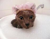 Чи варто заводити кота? - частина 1 Природа, Тварини, Кіт, Кішка, Коти, Любов, Позитив, Емоції, Найгарніші ФотоШпалери, ФотоШпалери на робочий стіл id339968303
