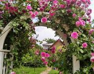 Знайомства і троянди - Нідерланди є провідним експортером троянд Природа, Квіти, Весна, Троянди, Любов / Кохання id1116191967
