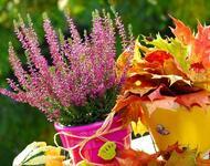 Квіти. Барви осені. Природа, Квіти, Позитив, Каталог Сайтів, Осінь id988400909