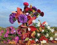 Квіти. Барви осені. Природа, Квіти, Позитив, Каталог Сайтів, Осінь id1241371372