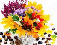 Квіти. Чарівна осінь. Природа, Квіти, Позитив, Каталог Сайтів, Осінь id128477789