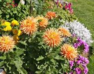 Flowers. Autumn colors.  Природа, Flowers, Positive, Site Directory, Autumn id987494635