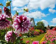 Flowers. Autumn colors.  Природа, Flowers, Positive, Site Directory, Autumn id1062165906