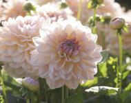 Цветы. Волшебная осень.  Природа, Цветы, Позитив, Каталог Сайтов, Осень id960417276