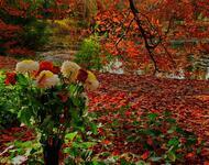 Flowers. Magic autumn.  Природа, Flowers, Positive, Site Directory, Autumn id268438472