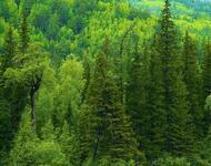 Дивовижна краса природи - частина 9 Небо, Гори, Озеро, Дерева, Ліс, Водоспад, Море, Океан, Схід, Захід id1122722298