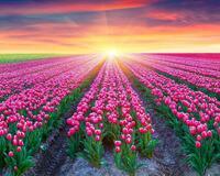 Шпалери Гарних квітів в природі частина 1 Природа, Квіти, Сонце id1150429053