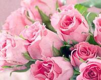 Квіти любові - частина 2 Троянди, Сад, Любов, Природа, Квіти id1823062948
