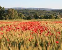 Шпалери - Прованс  - частина 6 Романтична зустріч, Франція, Прованс, Цікаві місця для побачень, Пам'ятки id364064869