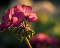 Дивовижна краса природи - частина 2 Ромашки, Небо, Любов, Природа, Квіти, Захід, Схід, Сонце id628877360