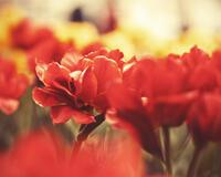 Дивовижна краса природи - частина 2 Ромашки, Небо, Любов, Природа, Квіти, Захід, Схід, Сонце id1800361286