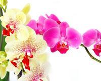 Дивовижна краса природи - частина 4 Ромашки, Троянди, Небо, Любов, Природа, Квіти, Захід, Схід, Сонце id552266970