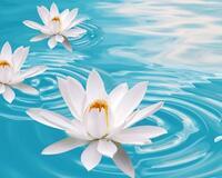 Дивовижна краса природи - частина 5 Метелик, Сакура, Троянди, Крокуси, Орхідея, Природа, Квіти, Захід, Схід, Сонце id1655187444