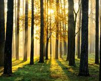 Дивовижна краса природи - частина 10 Небо, Гори, Озеро, Дерева, Ліс, Водоспад, Море, Океан, Схід, Захід id319959764