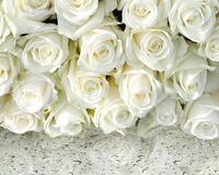 Чарівність троянд - частина 1 Краса Природи, Природа, Квіти, Троянди, Білі троянди, Рожеві троянди, Любов / Кохання id1438355074